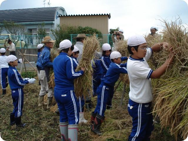 田んぼの学校「稲刈り」