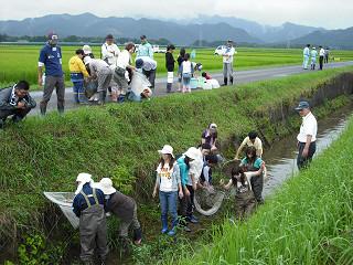立野用水路の生き物調査